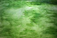 Y4444SP-Green Ice/Green Opal